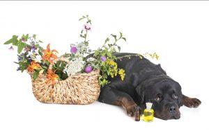 Pflanzenheilkunde für Tiere